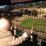 Henry taking in the elephants.